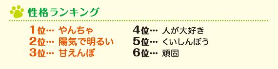 性格ランキング 1位 やんちゃ 2位 陽気で明るい 3位 甘えんぼ 4位 人が大好き 5位 くいしんぼう 6位 頑固