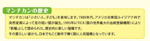 マンチカンの歴史 マンチカンは「小さい人、子ども」を意味します。1980年代、アメリカ合衆国ルイジアナ州で突然変異によって足の短い猫が誕生。1995年にTICA(猫の世界最大の血統登録機関)により「新種」として認められた、世界的に新しい猫種です。その愛らしい姿から、日本でもここ数年で瞬く間に人気猫種になっています。
