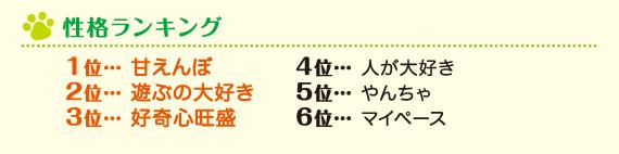 性格ランキング 1位 甘えんぼ 2位 遊ぶの大好き 3位 好奇心旺盛 4位 人が大好き 5位 やんちゃ 6位 マイペース