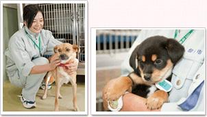仙台動物管理センターでは、出産した子も。