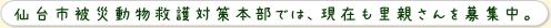 仙台市被災動物救護対策本部では、現在も里親さんを募集中