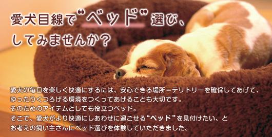 """愛犬目線で""""ベッド""""選び、してみませんか?"""