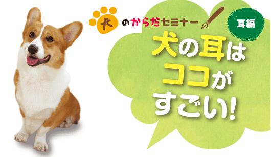 犬の耳はココがすごい!
