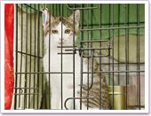 人慣れしていて、ケージにも抵抗の少ない成猫たち。(1)