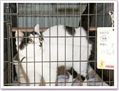 人慣れしていて、ケージにも抵抗の少ない成猫たち。(2)