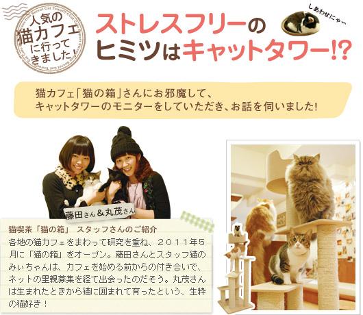 人気の猫カフェに行ってきました!ストレスフリーのヒミツはキャットタワー!?