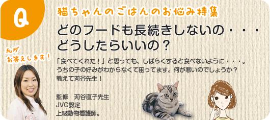 猫ちゃんのごはんのお悩み特集