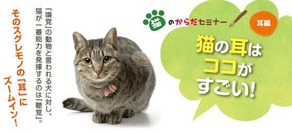 猫のからだセミナー 耳編 猫の耳はココがすごい!
