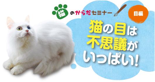 猫のからだセミナー 目編