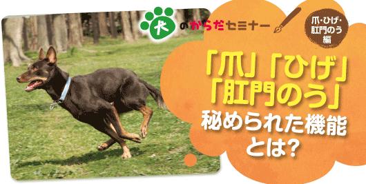犬のからだセミナー「爪」「ひげ」「肛門のう」秘められた機能とは?