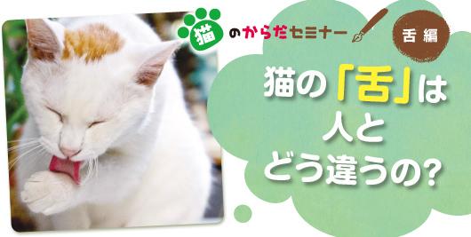猫のからだセミナー 舌編 猫の「舌」は人とどう違うの?