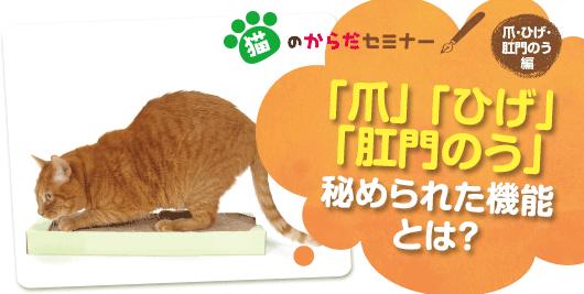 猫のからだセミナー「爪」「ひげ」「肛門のう」秘められた機能とは?