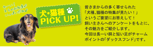 犬・猫種PICK UP!