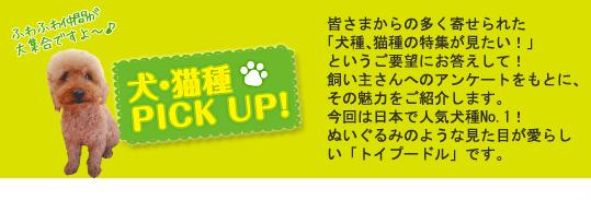犬・猫種PICK UP!トイプードル