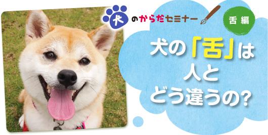 犬のからだセミナー 舌編 犬の「舌」は人とどう違うの?