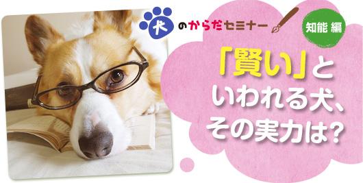 犬のからだセミナー 知能編 「賢い」といわれる犬、その実力は?
