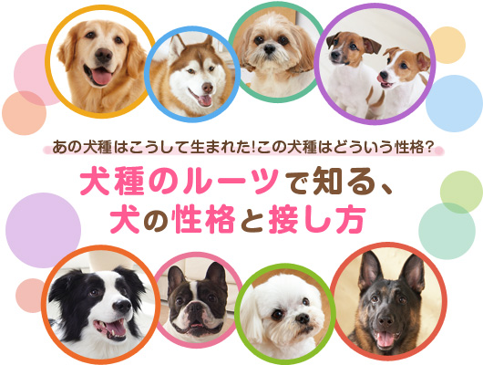 犬種のルーツで知る、犬の性格と接し方