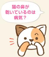 猫の鼻が乾いているのは病気?