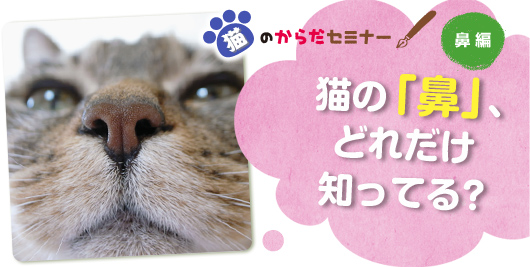 猫のからだセミナー 鼻編 猫の「鼻」、どれだけ知ってる?