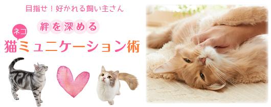 目指せ!好かれる飼い主さん 絆を深める猫ミュニケーション術