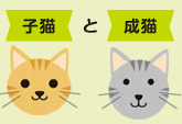 子猫 と 成猫