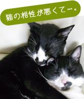 猫の相性が悪くて・・・。