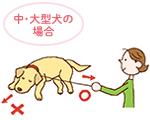 中・大型犬の場合