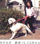 モデル犬 鉄本ソレイユちゃん