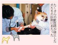 たくさんの獣医師が被災した犬たちの診察にあたった