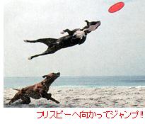 フリスビーへ向かってジャンプ!!