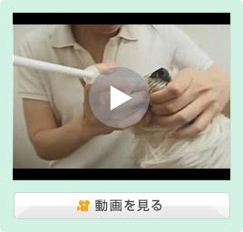 犬の薬の飲ませ方/錠剤/投薬器を使った場合