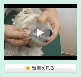 犬の薬の飲ませ方/粉剤