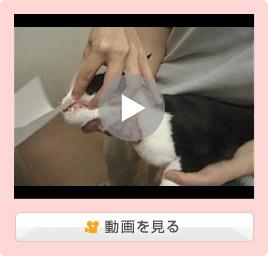 猫の薬の飲ませ方/粉剤