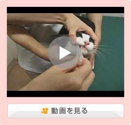 猫の薬の飲ませ方/液剤