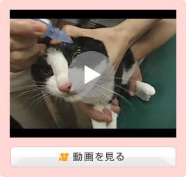 猫の目薬のさし方