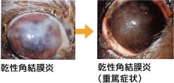 乾性角結膜炎