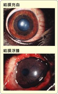 結膜充血と結膜浮腫