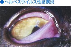 ヘルペスウイルス性結膜炎