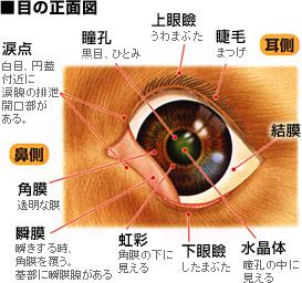 目の正面図