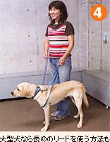 大型犬なら長めのリードを使う方法も