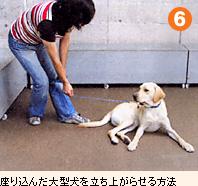 座り込んだ大型犬を立ち上がらせる方法