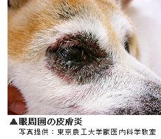 眼周囲の皮膚炎