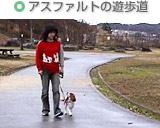 アスファルトの遊歩道