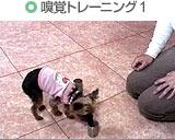 嗅覚トレーニング1