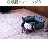 嗅覚トレーニング3
