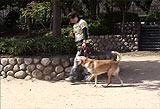 足が弱ってきた犬の歩かせ方