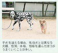 子犬を迎える場合、先住犬とは異なる犬種、性別、体格、性格を選んだほうがうまくいくことが多い。