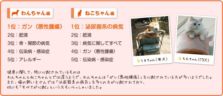 わんちゃん編、猫ちゃん編
