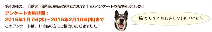 第42回は、「愛犬・愛猫の歯みがきについて」のアンケートを実施しました!