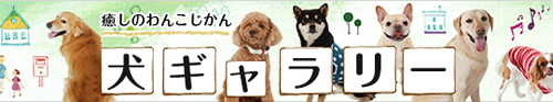 犬ギャラリー